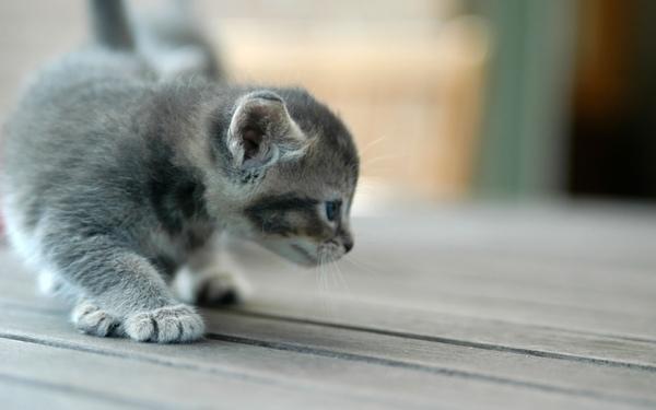 Ks_Kitten_scouting_1920x1200 (1).jpg