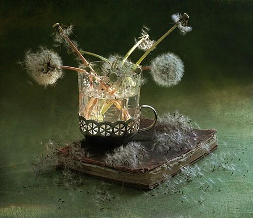 dandelion,light,fairy,magical,art,photography-ef1bd577e9e50f8e306a4a7699bcbbd5_h.jpg