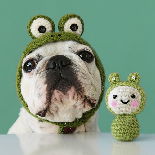 cute,dog,green,toy-a7d749981f807fdd74a758b3f99300f9_h.jpg
