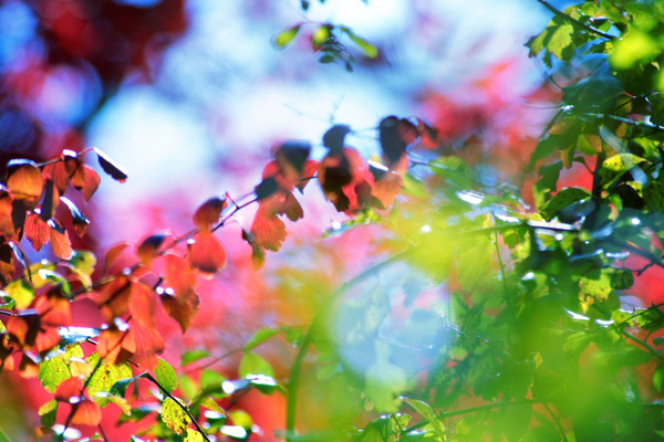 nature_color_blast_wallpaper_by_DyingBeautyStock.jpg