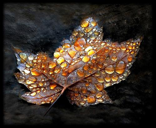 idea,nature,autumn,rainy,art,drop-3c5cc5acfd1f09fb06fbc665dedcf013_h.jpg