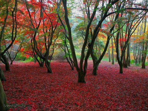 color,escape,simple,autumn,beautiful,colour-eef5ecdbc40bcff3993248568423245c_h.jpg