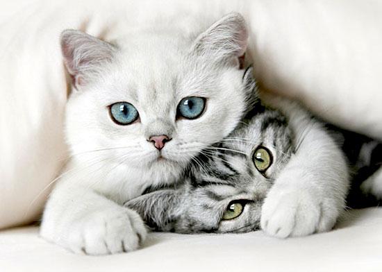 animals_in_love_2.jpg
