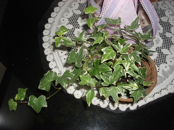 室內觀賞植物