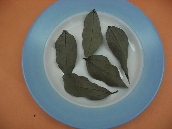 乾的台灣土肉桂背面葉紋