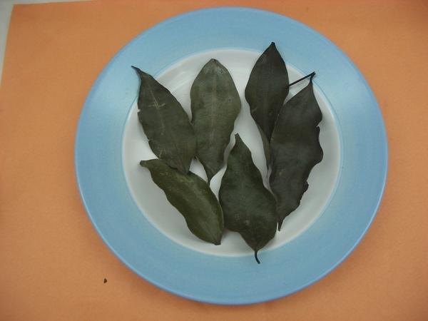 乾的台灣土肉桂正面葉紋