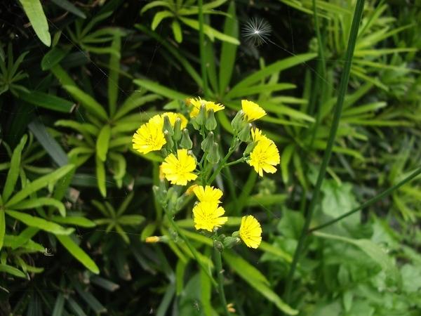 庭園中的野花