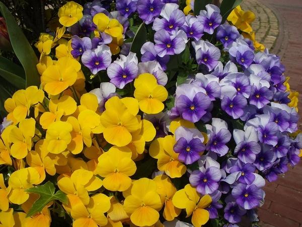 美麗的花卉