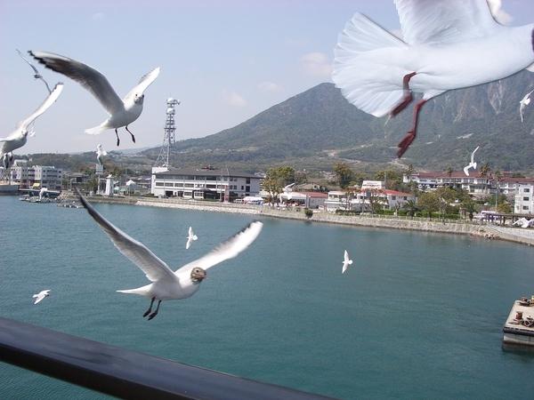 海鷗展翅飛翔