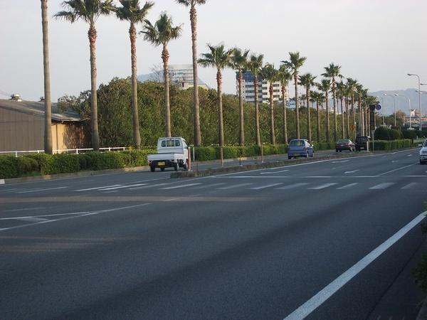 美麗的椰子樹車子靠左行駛