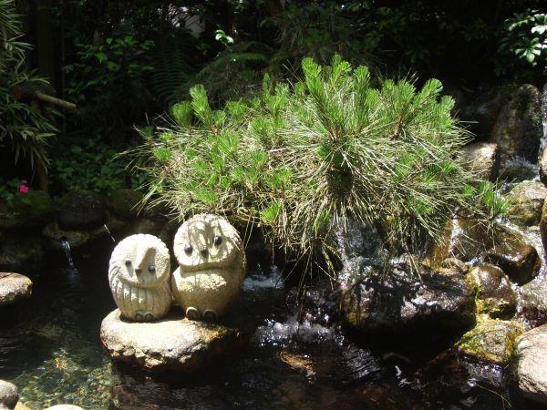 園內造景石製的可愛貓頭鷹和松樹