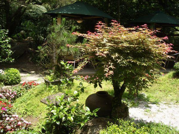 園中的花園造景紅牙的青楓