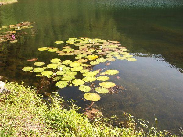 龜山島島尾湖