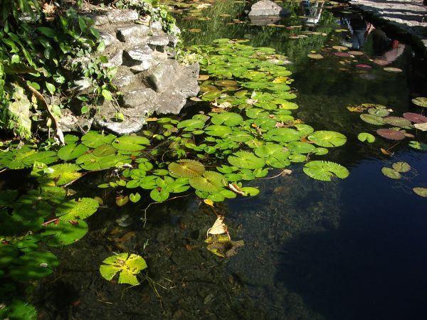 島尾湖一角