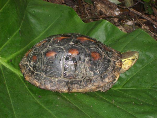 山上的烏龜
