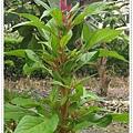 IMGP5795-crop.JPG
