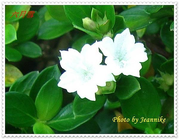 DSC01207-crop2.JPG