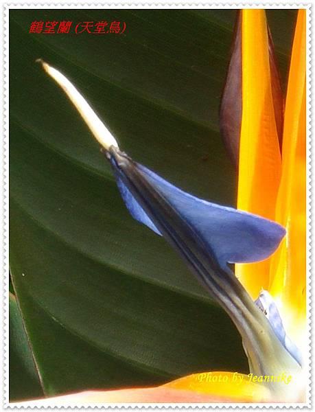DSC01256-crop.JPG