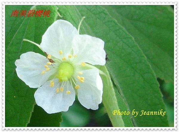 DSC01750-crop.JPG