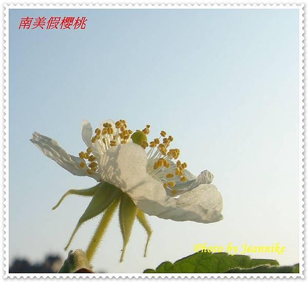 DSC01769-crop.JPG