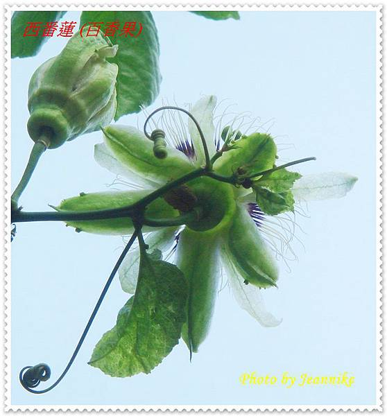 DSC01902-crop.JPG
