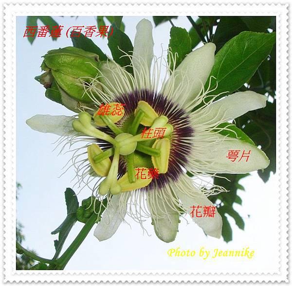 DSC01906-crop.JPG