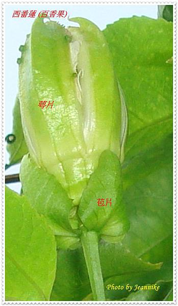 DSC01907-crop.JPG