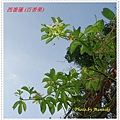 DSC01908-crop.JPG