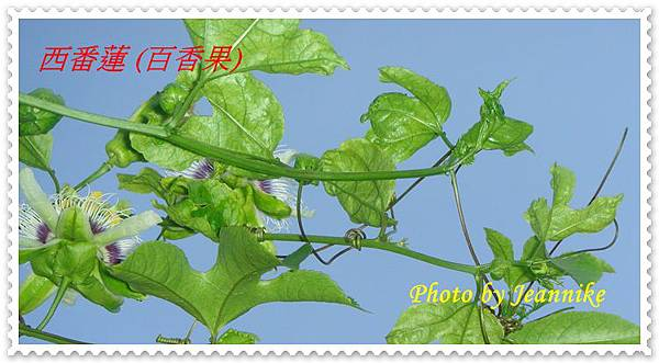 DSC01909-crop.JPG