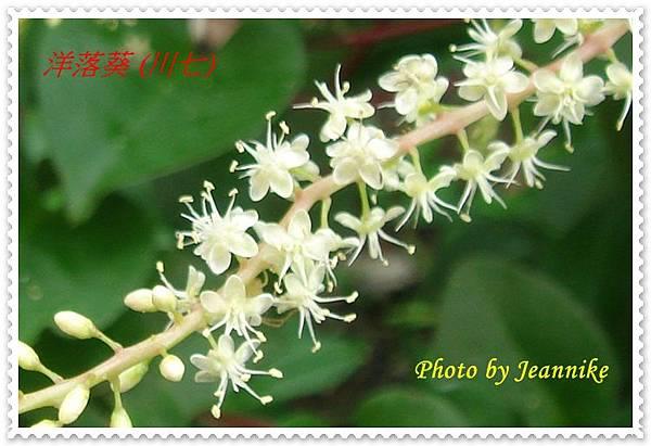 DSC01969-crop.JPG