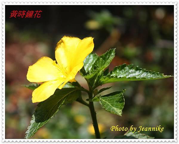IMG_2049-crop.JPG