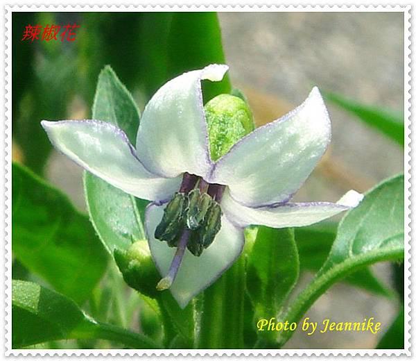 DSC01474-crop.JPG