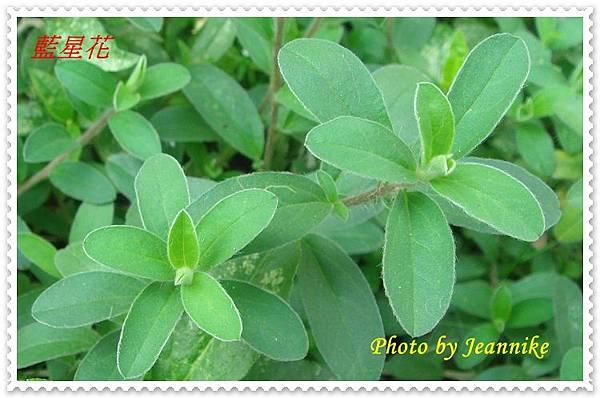 DSC02547-crop.JPG