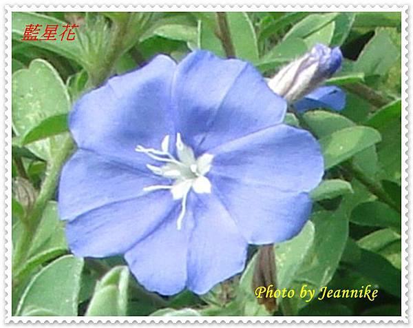 DSC02576-crop.JPG