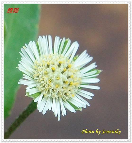 DSC06495-crop.JPG