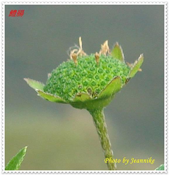 DSC06497-crop.JPG