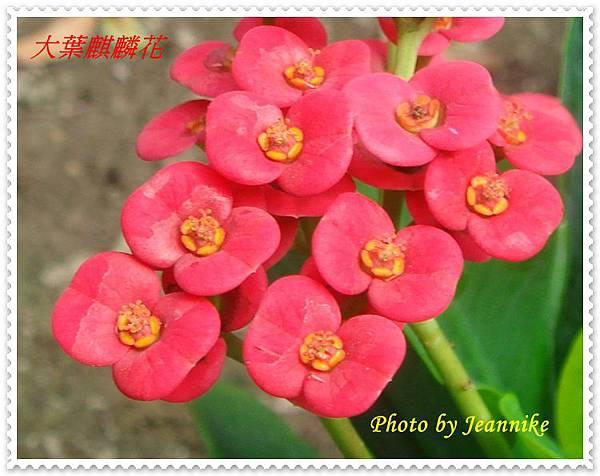DSC02511-crop.JPG