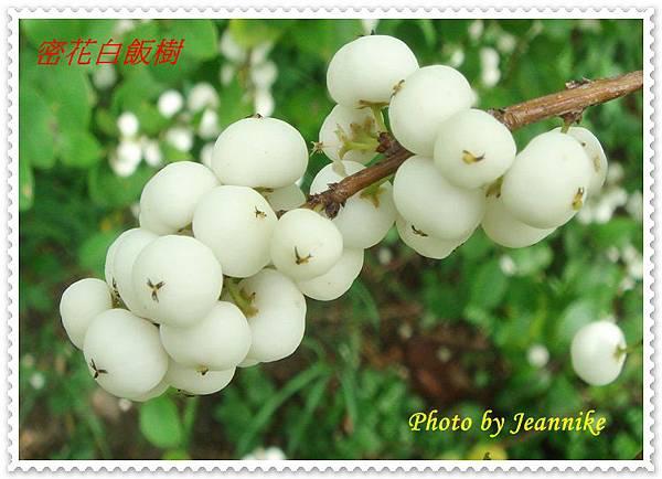 DSC02735-crop.JPG
