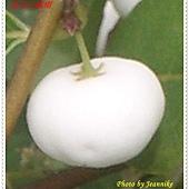 IMGP3509-crop2.JPG
