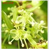 花-crop.jpg