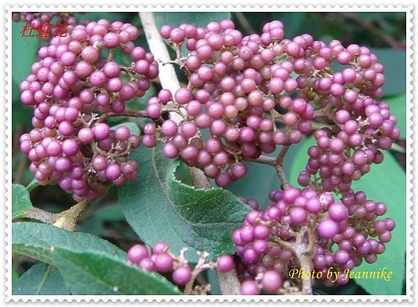 DSC03677-crop.JPG