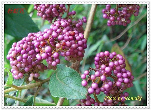 DSC03679-crop.JPG