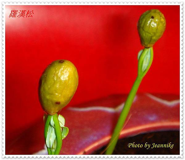 DSC02799-crop.JPG
