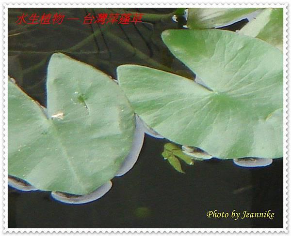 DSC03994-crop.JPG