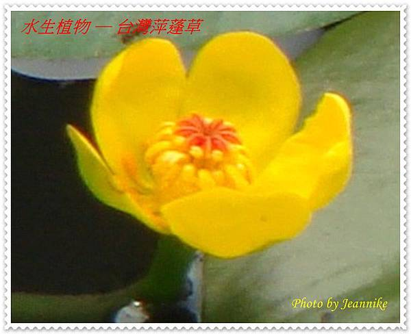 DSC03995-crop.JPG
