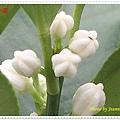IMGP5600-crop.JPG
