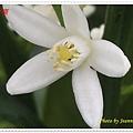 IMGP5602-crop.JPG