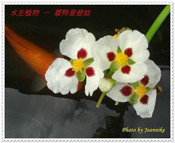 DSC04533-crop.JPG