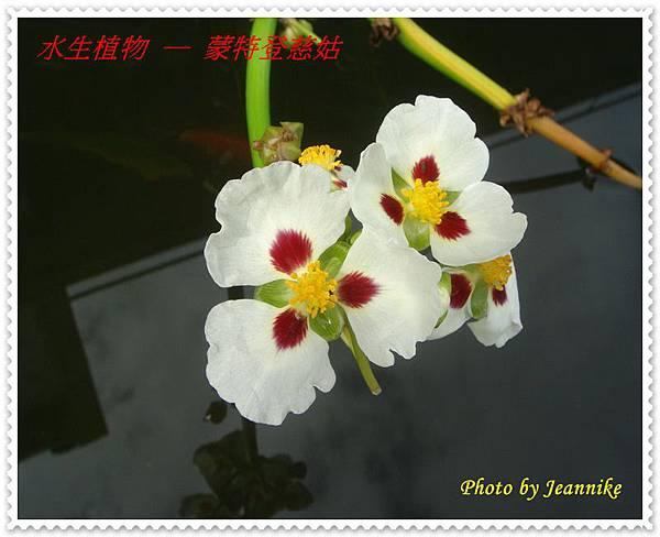 DSC04540.JPG