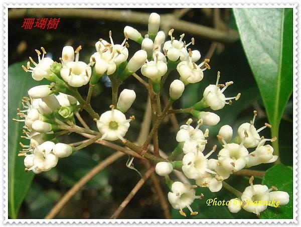 DSC05824-crop